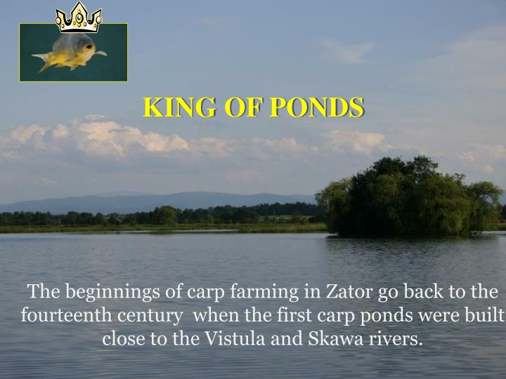 KING OF PONDS