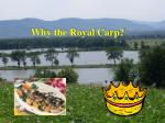 why the royal carp