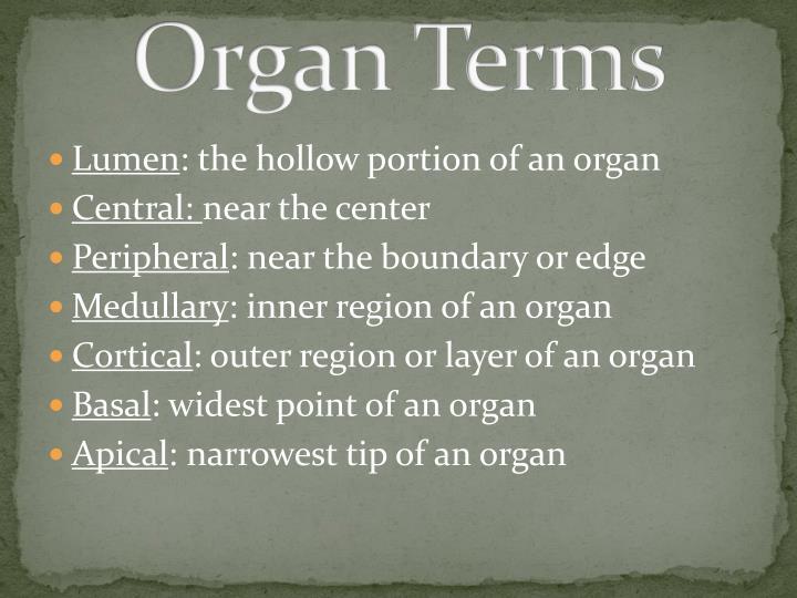 Organ Terms