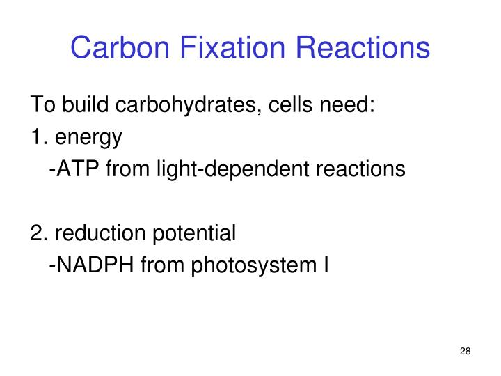 Carbon Fixation Reactions
