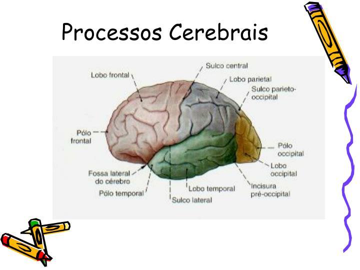 Processos Cerebrais