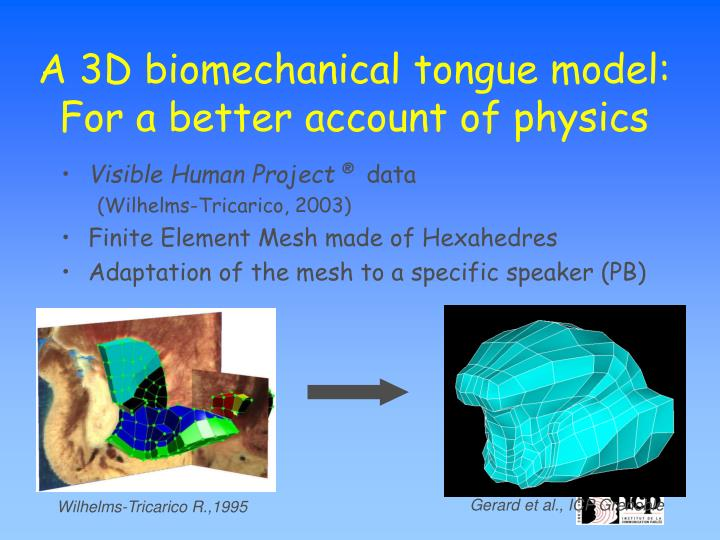 A 3D biomechanical tongue model:
