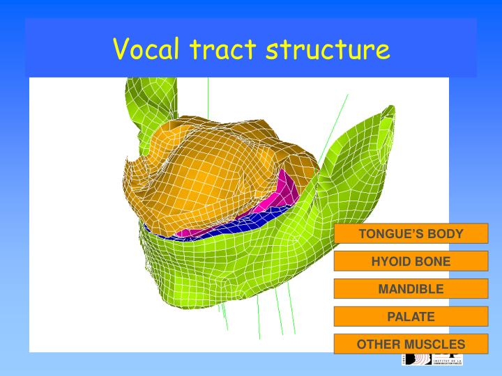 Vocal tract structure