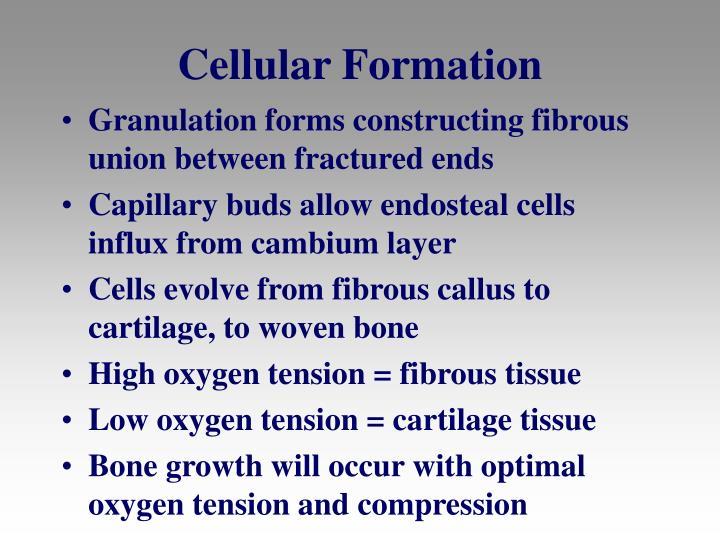 Cellular Formation