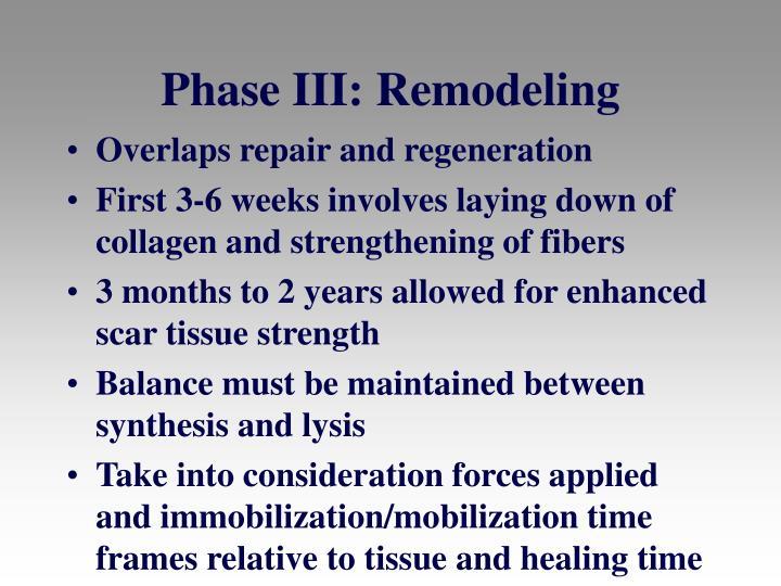 Phase III: Remodeling