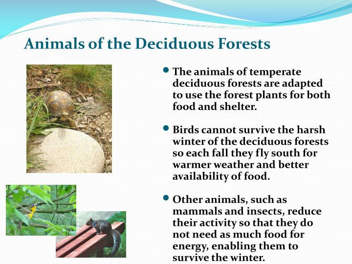 Animals of the Deciduous Forests