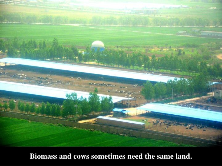 Biomass and cows sometimes need the same land.