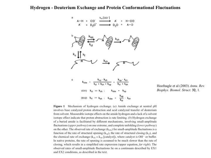 Hydrogen - Deuterium Exchange and Protein Conformational Fluctuations