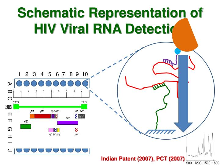 Schematic Representation of HIV Viral RNA Detection