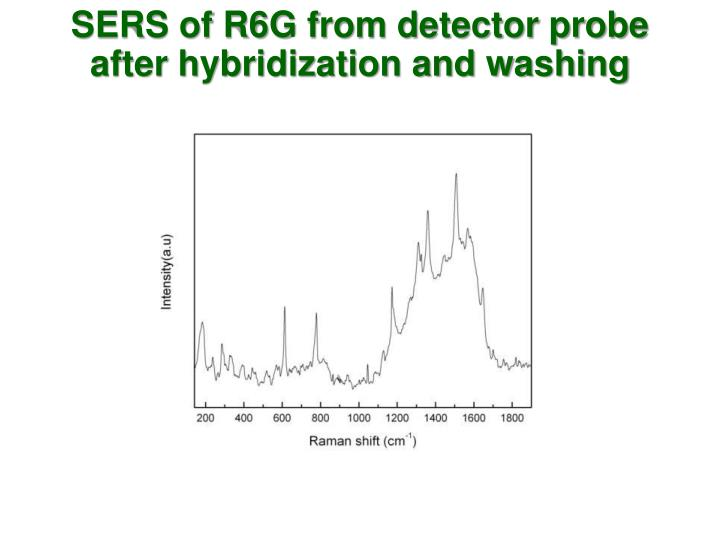 SERS of R6G from detector probe after hybridization and washing