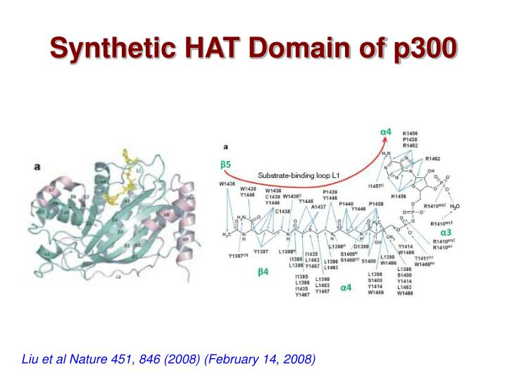 Synthetic HAT Domain of p300