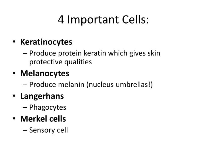 4 Important Cells: