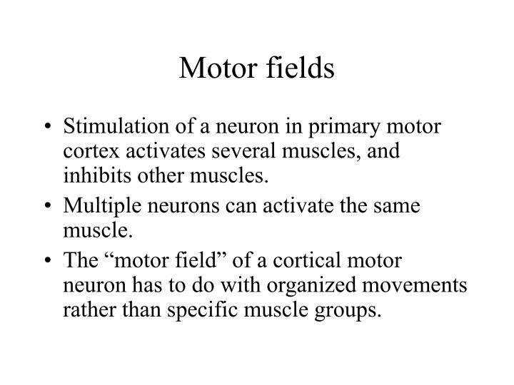 Motor fields