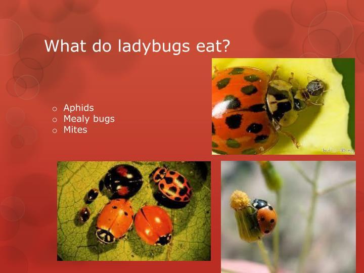 Life cycle of ladybug