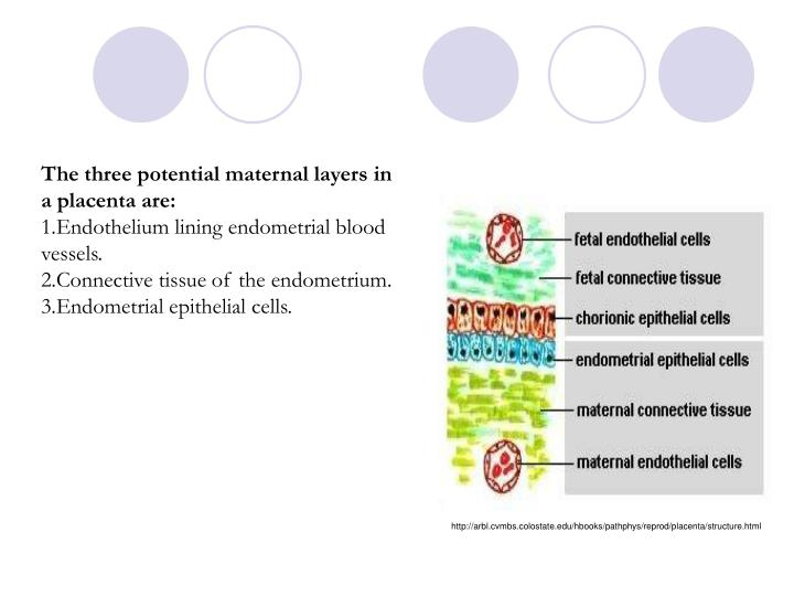The three potential maternal layers in a placenta are: