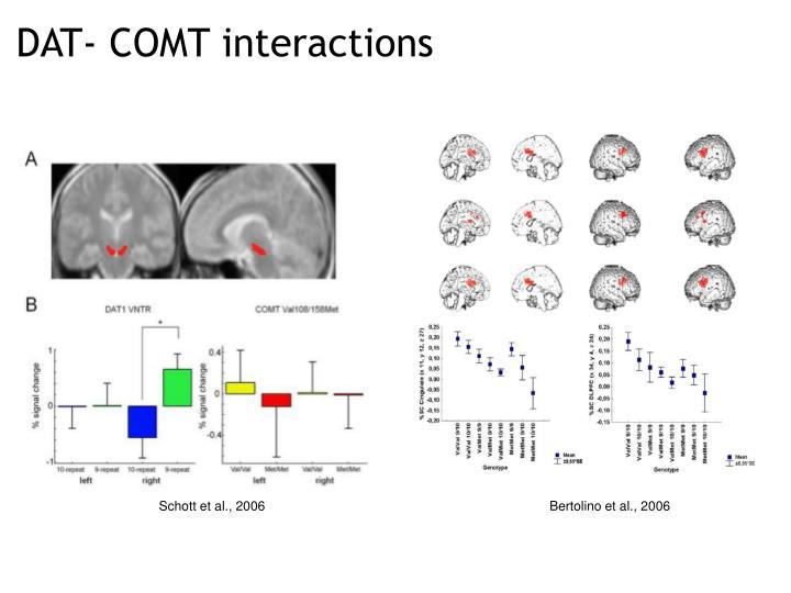 DAT- COMT interactions