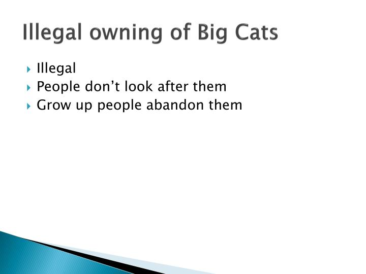 Illegal owning of Big Cats