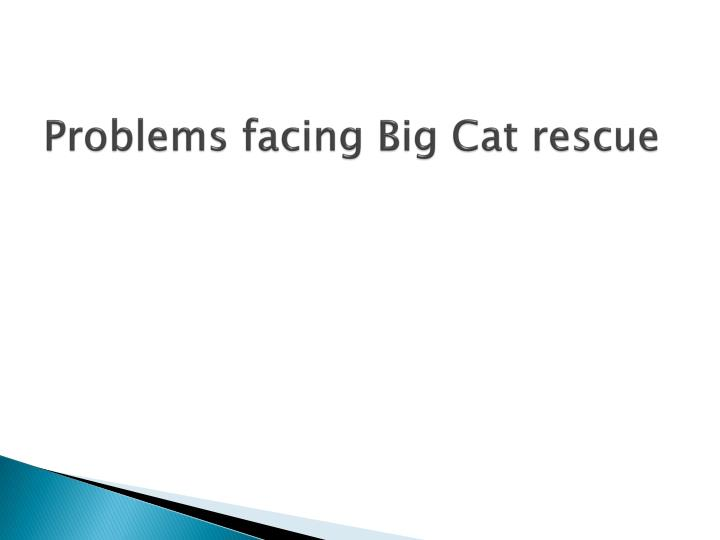 Problems facing Big Cat rescue
