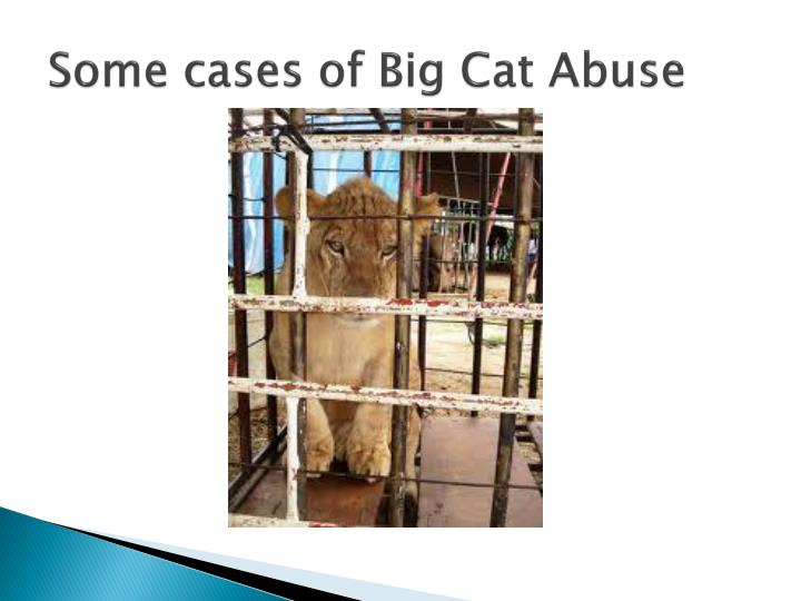 Some cases of Big Cat Abuse