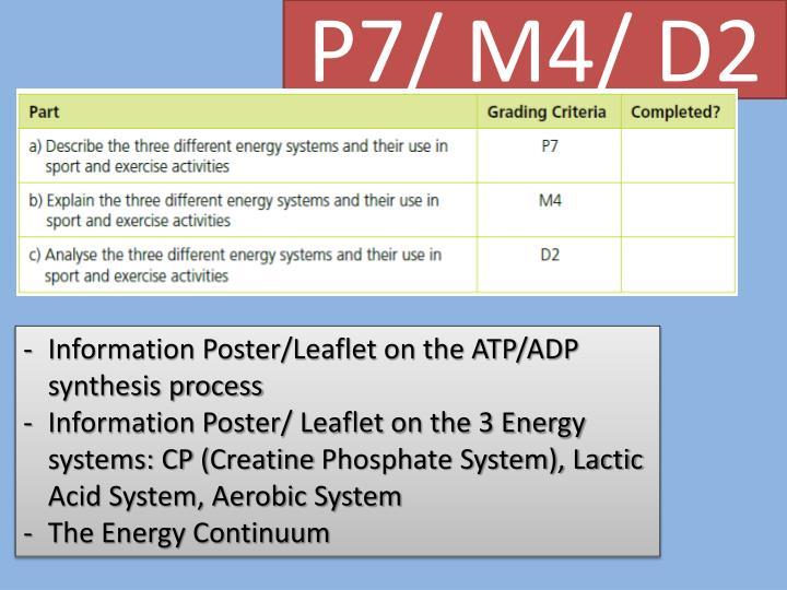 P7/ M4/ D2