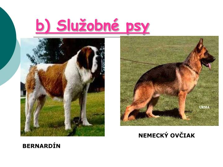b) Služobné psy