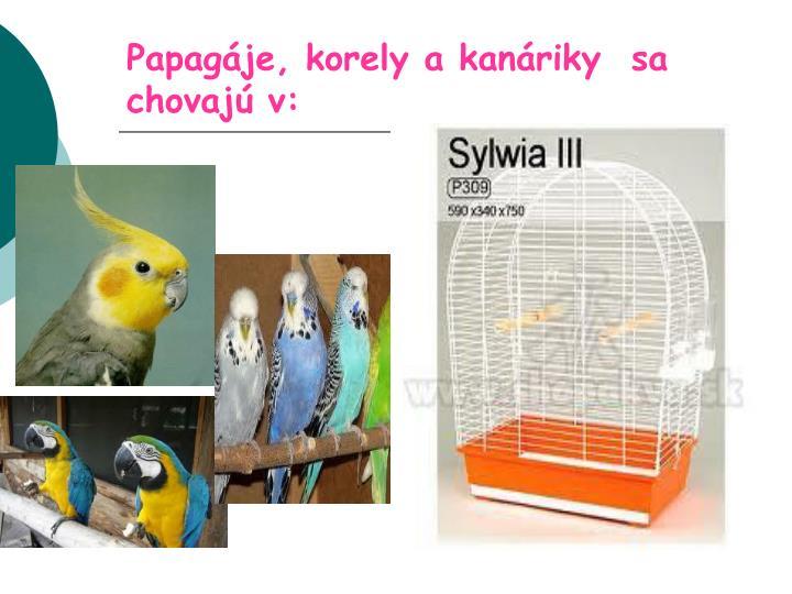 Papagáje, korely a kanáriky  sa chovajú v: