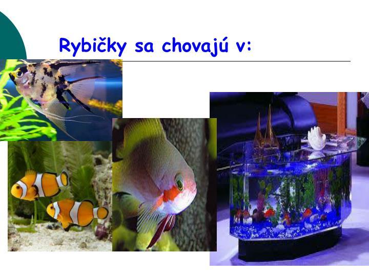 Rybičky sa chovajú v: