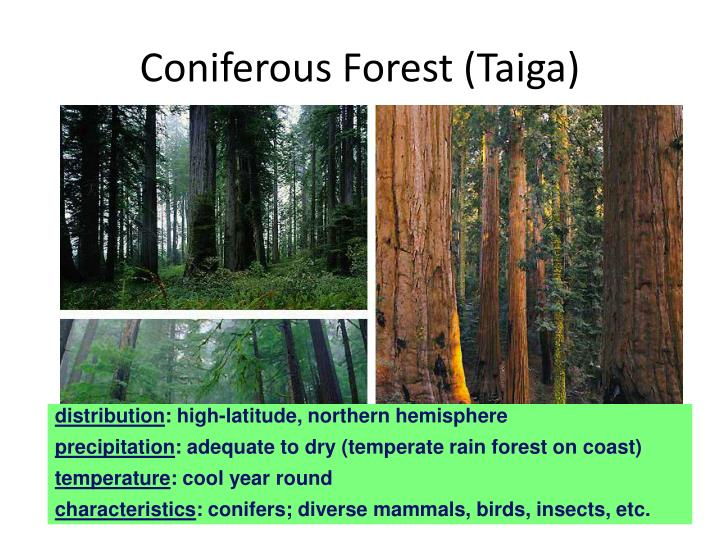 Coniferous Forest (Taiga)