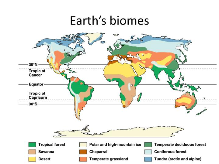 Earth s biomes