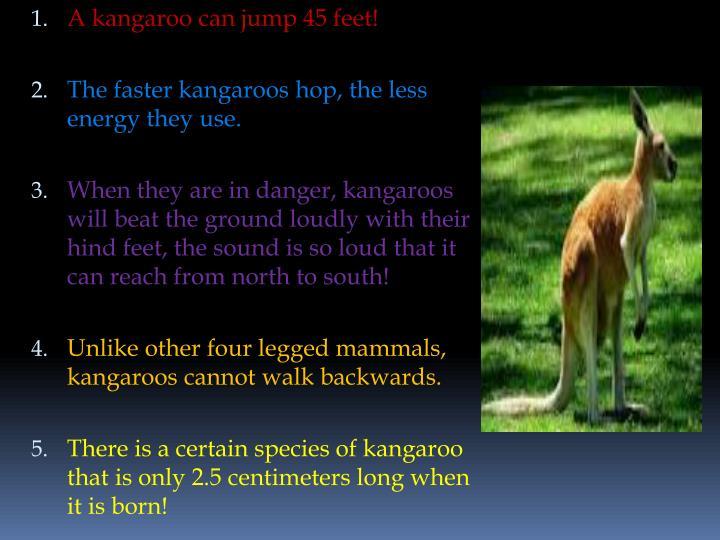 A kangaroo can jump 45 feet!