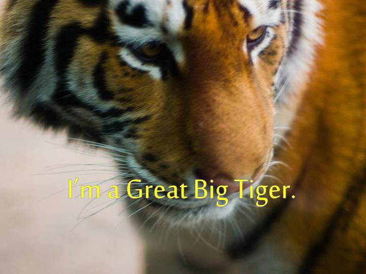 I'm a Great Big Tiger.