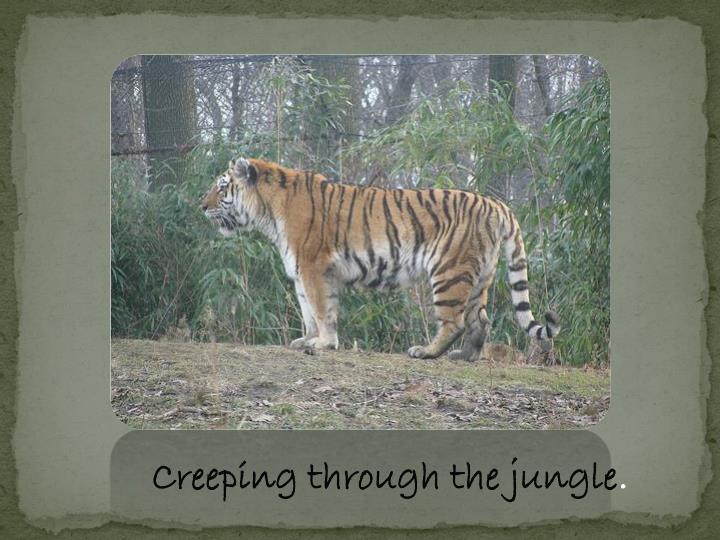 Creeping through the jungle