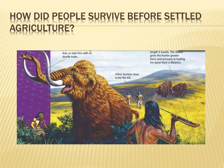 How did people survive before settled agriculture?