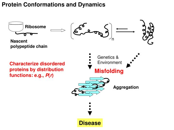 Protein Conformations and Dynamics