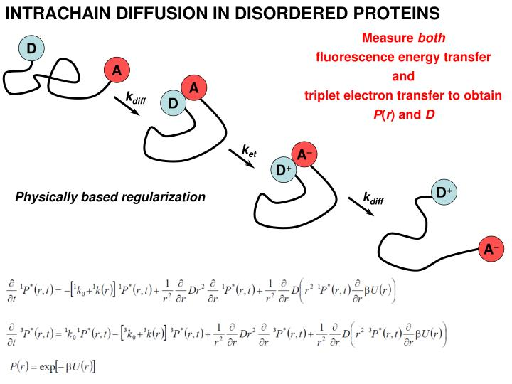 INTRACHAIN DIFFUSION IN DISORDERED PROTEINS