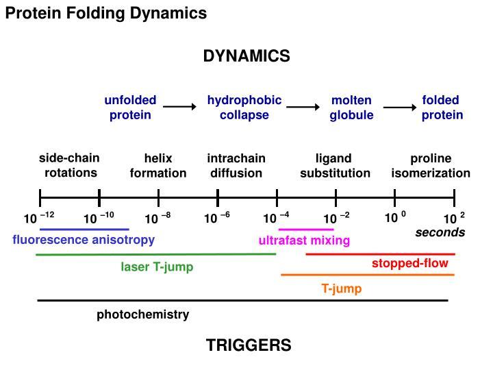 Protein Folding Dynamics