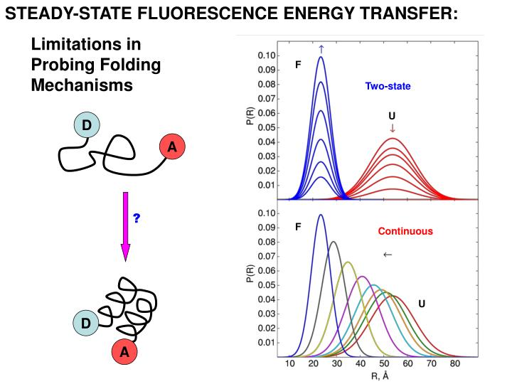 STEADY-STATE FLUORESCENCE ENERGY TRANSFER: