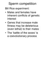 sperm competition1