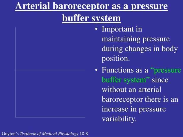 Arterial baroreceptor as a pressure buffer system