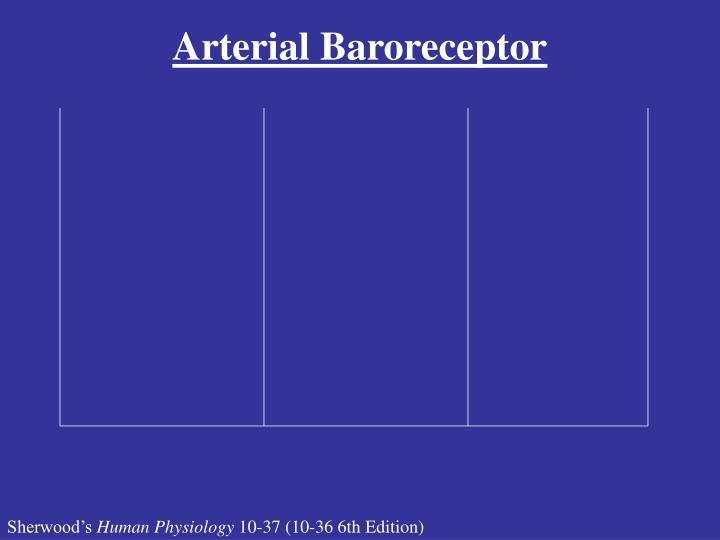 Arterial Baroreceptor