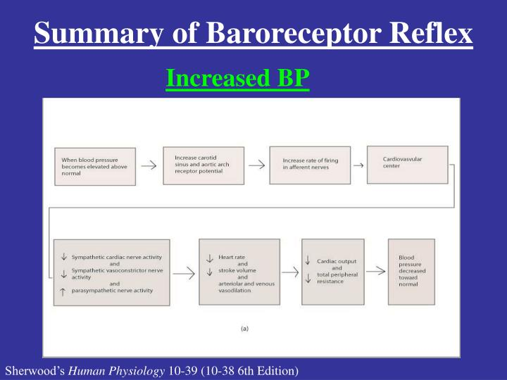 Summary of Baroreceptor Reflex