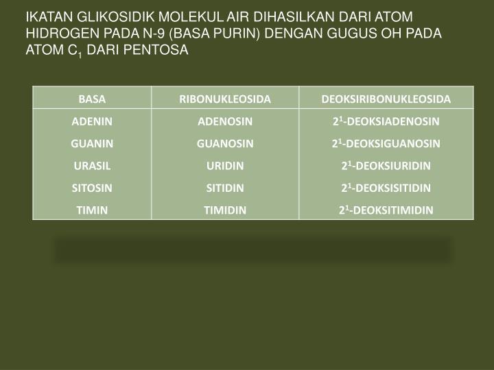 IKATAN GLIKOSIDIK MOLEKUL AIR DIHASILKAN DARI ATOM HIDROGEN PADA N-9 (BASA PURIN) DENGAN GUGUS OH PADA ATOM C