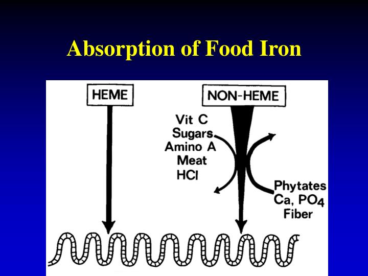 Absorption of Food Iron