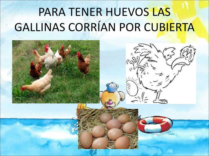 PARA TENER HUEVOS LAS GALLINAS CORRÍAN POR CUBIERTA