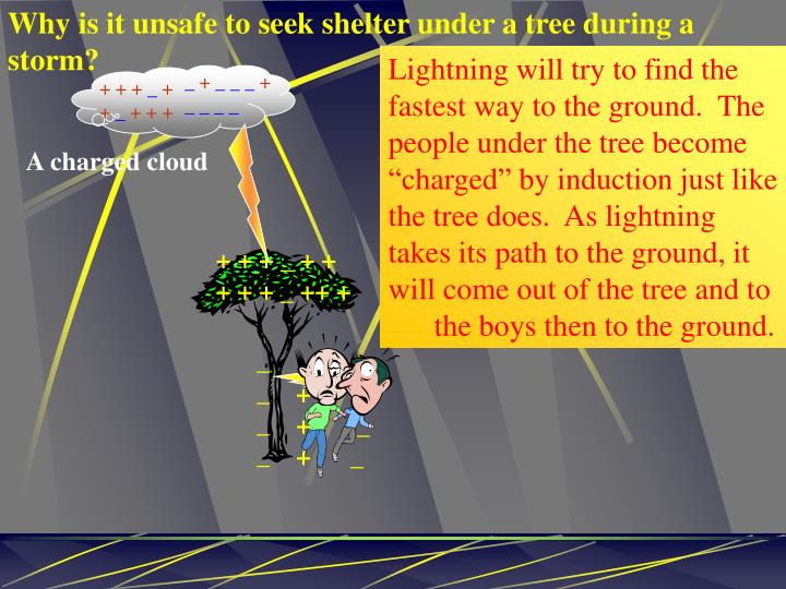 Why is it unsafe to seek shelter under a tree during a