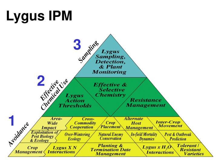 Lygus IPM