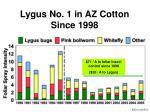 lygus no 1 in az cotton since 1998