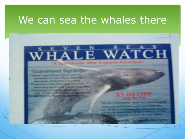 We can sea the whales there