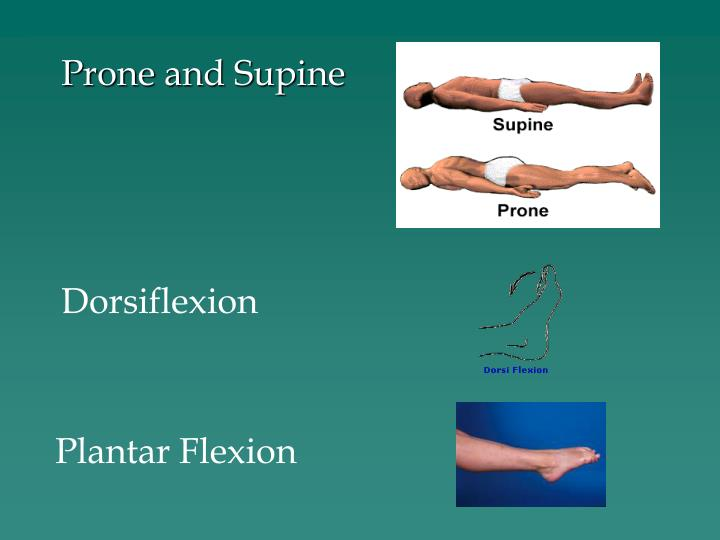 Prone and Supine