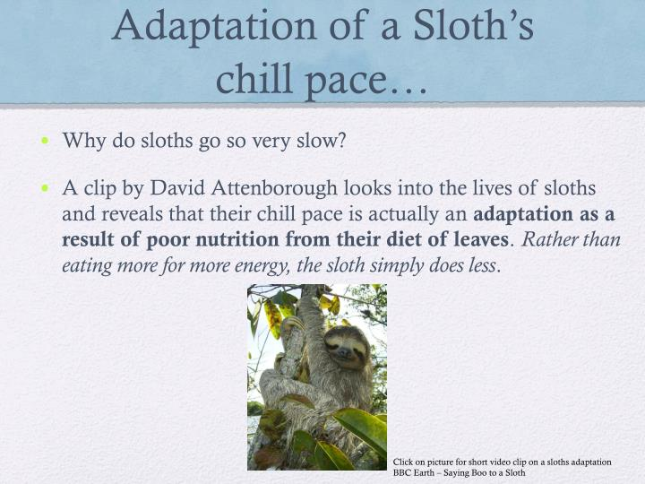 Adaptation of a Sloth's